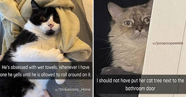 "fresh cat snaps - thumbnail of cat with towel ""He's obsessed with wet towels. Whenever I have one he yells until he is allowed to roll around on it."" and cat watching ""I should not have put her cat tree next to the bathroom door"""