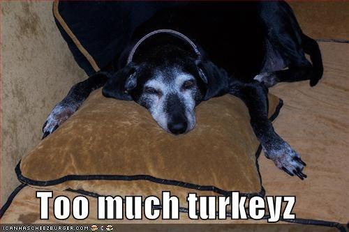 labrador sleepy thanksgiving tired Turkey - 1395131136