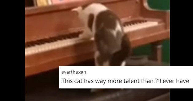"cat plays the piano - thumbnail of cat playing the piano and someone commenting ""This cat has way more talent than I'll ever have"""