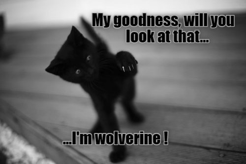 "ichc original cat memes lolcats - thumbnail includes black kitten looking at its claws ""my goodness will you look at that... i'm wolverine!"""