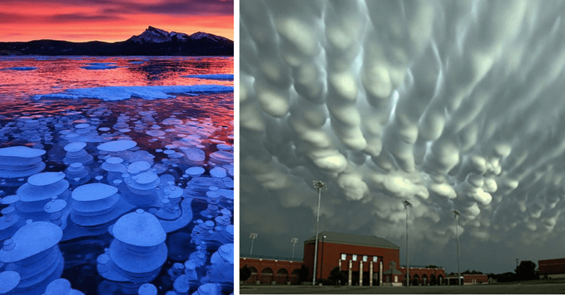13 weird things that nature created