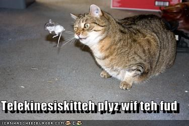 fud,lolcats,playing,telekinesis