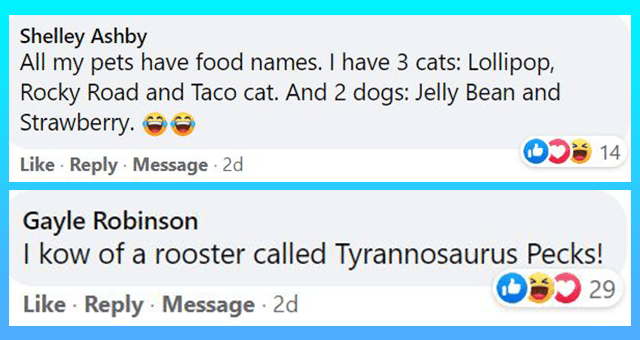 Facebook comments of funny names given to pets thumbnail includes two Facebook comments 'Human body - Shelley Ashby All my pets have food names. I have 3 cats: Lollipop, Rocky Road and Taco cat. And 2 dogs: Jelly Bean and Strawberry. 14 Like · Reply · Message 2d' and 'Human body - Gayle Robinson I kow of a rooster called Tyrannosaurus Pecks! OD 29 Like · Reply · Message · 2d'