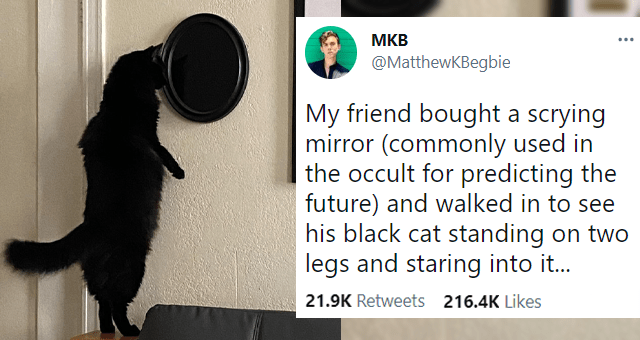This week's collection of cat tweets thumbnail includes a picture of a cat looking into a scrying mirror and one tweet 'Cat - MKB @MatthewKBegbie My friend bought a scrying mirror (commonly used in the occult for predicting the future) and walked in to see his black cat standing on two legs and staring into it. 9:21 PM Mar 28, 2021 Twitter Web App 21.9K Retweets 1,887 Quote Tweets 216.4K Likes'