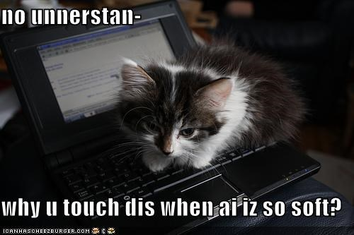 confused cute kitten laptop lolcats lolkittehs soft - 1396637440