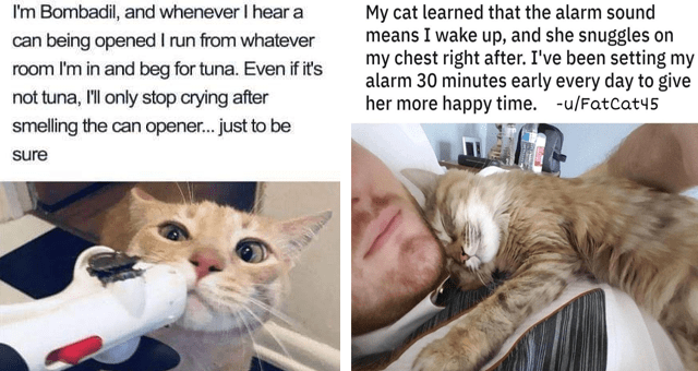 collection of short stories tweets and tumblr posts about cats thumbnail includes two posts including a cat lying on a guy's chest 'Cat - My cat learned that the alarm sound means I wake up, and she snuggles on my chest right after. I've been setting my alarm 30 m' and a cat sniffing a can opener 'Cat - I'm Bombadil, and whenever I hear a can being opened I run from whatever room I'm in and beg for tuna. Even if it's not tuna, 'l only stop crying after smelling the can opener... just to be sure'