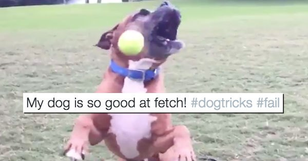 fetch bad dogs twitter FAIL funny - 1396741