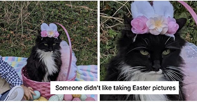 "Fresh cat memes - cat dressed up for easter ""someone didn't like taking easter pictures"""