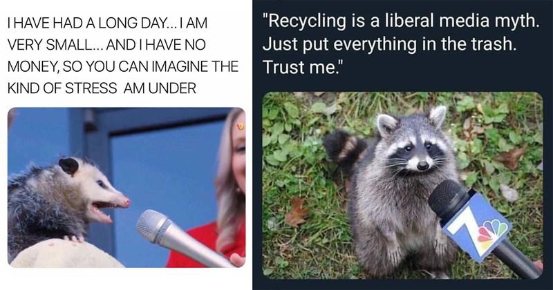 funny memes, animal memes, trash animal memes, raccoons, possum, dank memes, wholesome memes, cute memes, relatable memes, marsupials