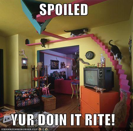 doin it rite house lolcats spoiled - 1397501184