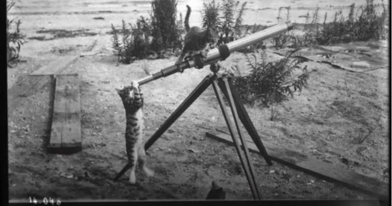 history Memes Cats animals - 1397509
