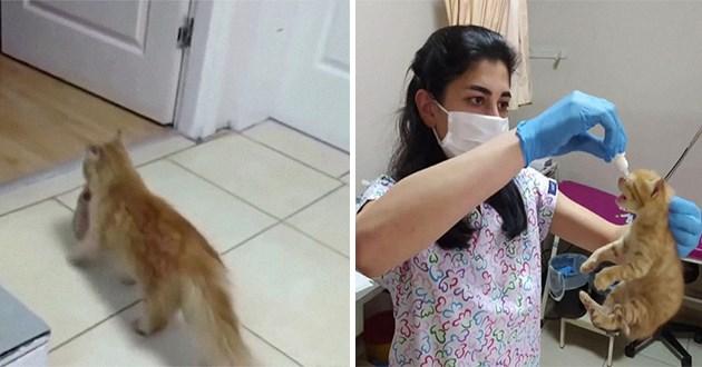 stray cat brings kittens to vet - thumbnail of stray cat with kitten and then vet with kitten