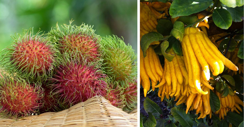 13 unusual fruits you haven't heard of