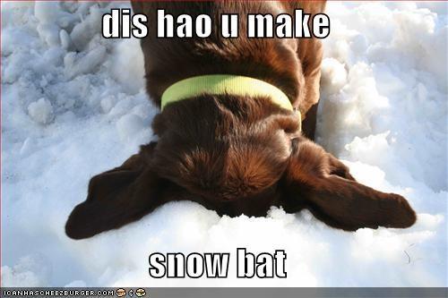 labrador playing snow - 1398109440