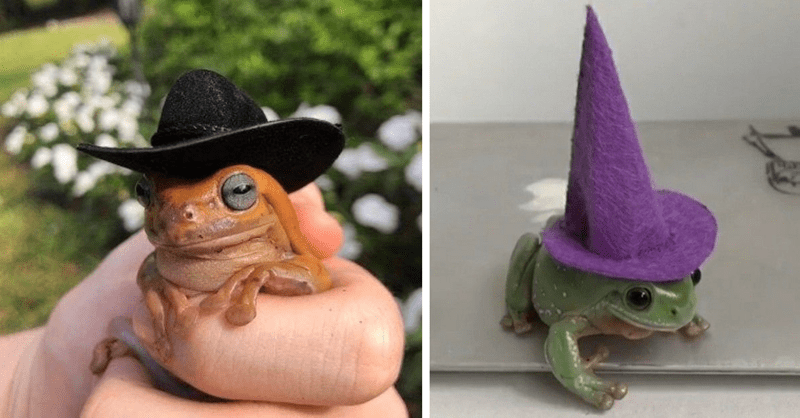 15 photos of frogs in hats