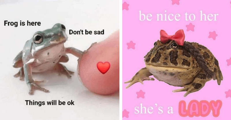 14 frog memes to cheer you up
