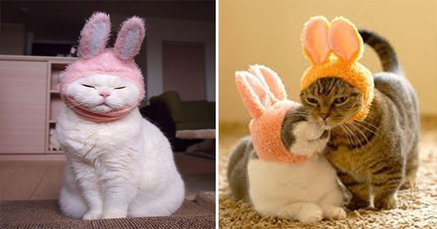 cats in bunny hats - thumbnail of cats in bunny hats