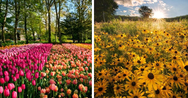 14 photos of fields of flowers