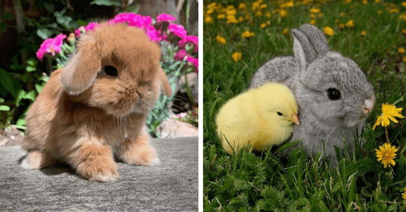 cute bunnies and chicks photos for easter
