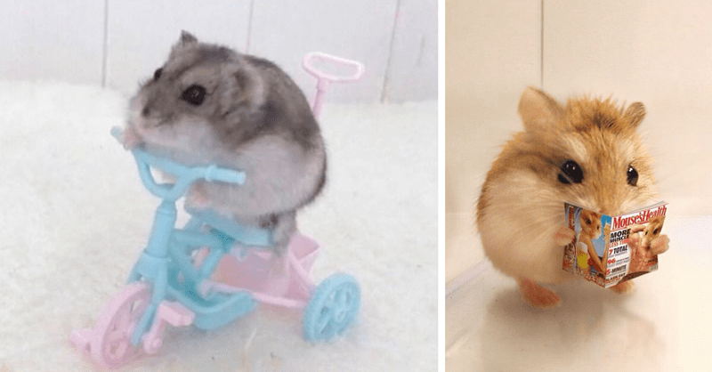16 pictures of hamsters acting like humans