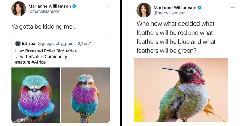 Marianne Williamson birdposting, bird tweets, birds, wholesome tweets, politics, spiritual, animals