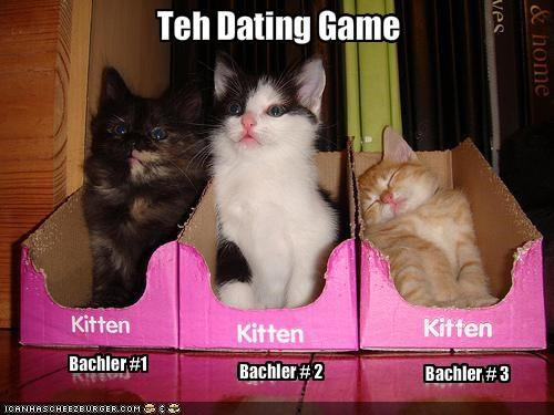 bachelor cute dating game kitten lolcats lolkittehs - 1399523584