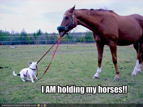 horse jack russel terrier leash lolhorses outside - 1399774976