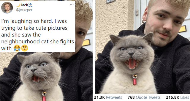 this week's collection of animal tweets thumbnail includes two pictures of a guy taking selfies with a progressively angrier cat and one tweet 'Hair - Jack @jxckcper I'm laughing so hard. I was trying to take cute pictures and she saw the neighbourhood cat she fights with 10:51 AM Apr 2, 2021 · Twitter for iPhone 21.3K Retweets 768 Quote Tweets 215.8K Likes'