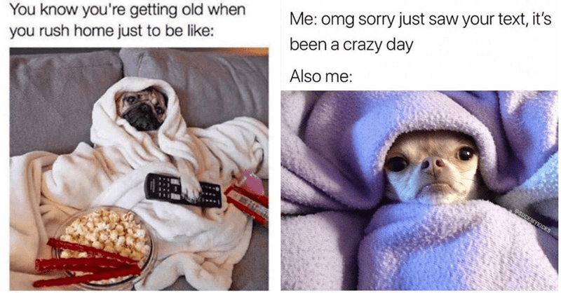 14 memes about dogs in bed