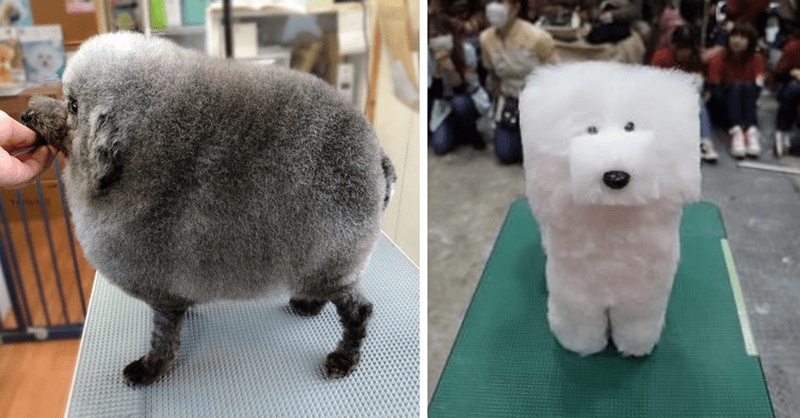 15 dogs with weird haircuts
