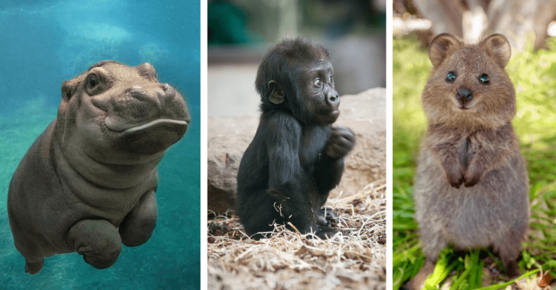20 baby animals that aren't cats or dogs