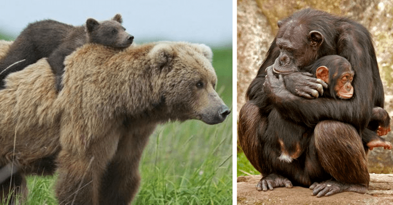 15 photos of animals and their offspring