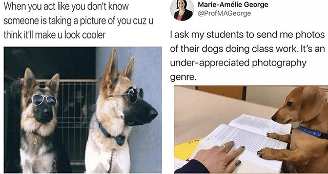 this week's collection of dog memes thumbnail includes two memes including a dog with sunglasses posing '' and a dog sitting in front of a notebook at a desk ''