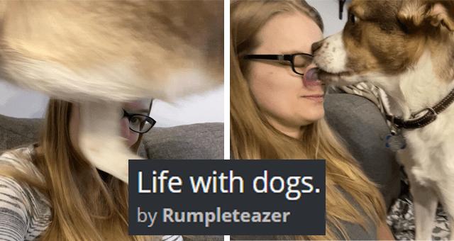 aww wholesome dogs life adorable heartwarming struggle cute doggo lol personal space funny - 14010885