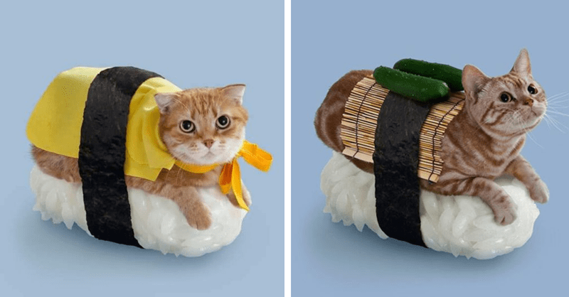 photos of cats dressed like sushi