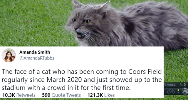 This week's collection of cat tweets thumbnail includes a picture of a cat on a baseball field and one tweet 'Cat - Amanda Smith ... @AmandaRTubbs The face of a cat who has been coming to Coors Field regularly since March 2020 and just showed up to the stadium with a crowd in it for the first time. PRICE 21 TCHES 1-2 4 11 6 -8 6:46 AM · Apr 3, 2021 · Twitter for iPhone 10.3K Retweets 590 Quote Tweets 121.3K Likes'
