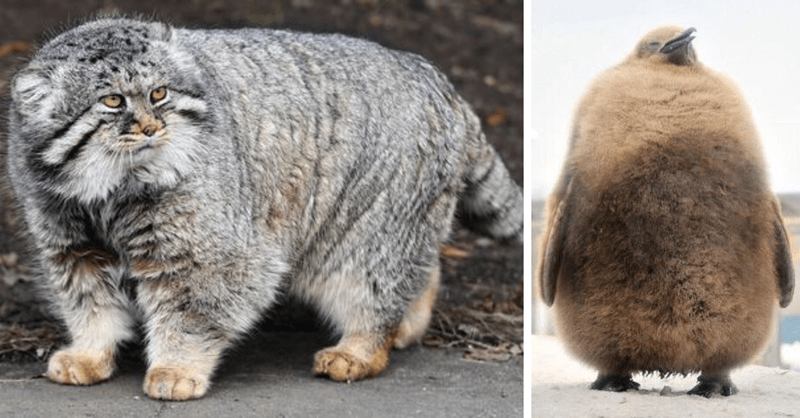 16 chonky animals to make you smile