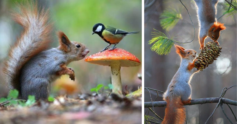 11 beautiful photos of squirrels in forests