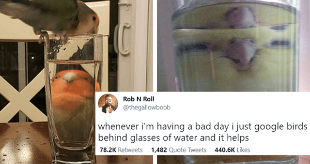 tweets of animals behind glasses of water thumbnail includes two pictures of distorted parrots behind glasses of water and one tweet 'Liquid - Rob N Roll @thegallowboob whenever i'm having a bad day i just google birds behind glasses of water and it helps 12:42 AM Apr 4, 2021 Twitter Web App 78.2K Retweets 1,482 Quote Tweets 440.6K Likes'