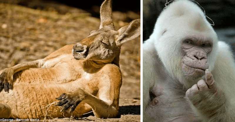 10 pictures of animals who know they look great