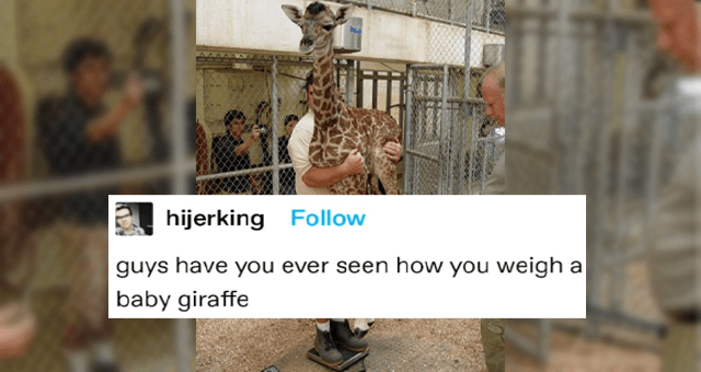 collection of wholesome tumblr animal posts thumbnail includes a picture of a man holding up a baby giraffe and weighing it 'Giraffe - hijerking guys have you ever seen how you weigh a baby giraffe hijerking isn't life great Source: hijerking 621,283 notes ...'