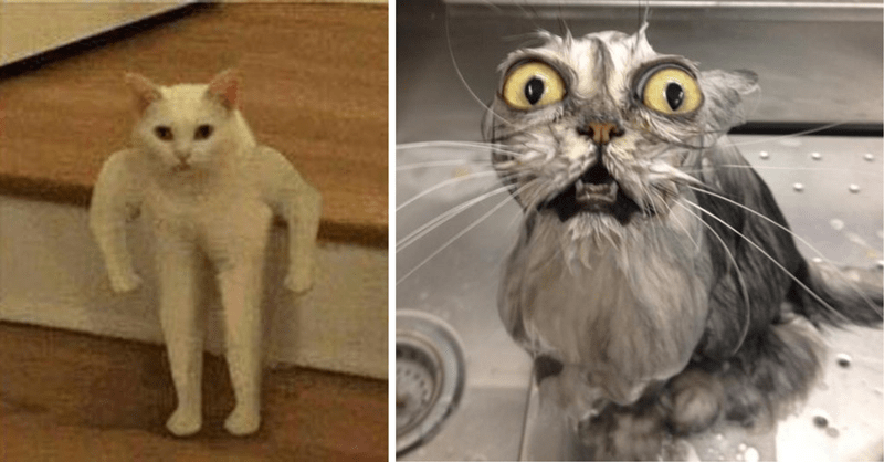 cat photos that are weirdly wrong