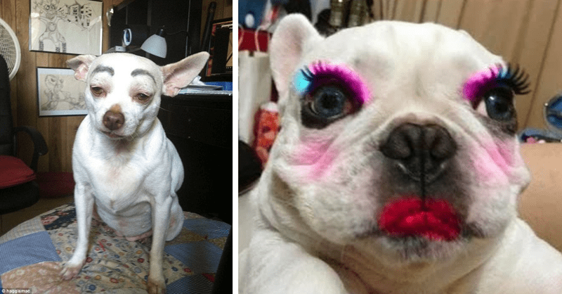 funny photos of dogs and cats wearing makeup