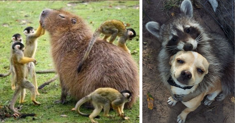 13 animal friendships that are unlikely