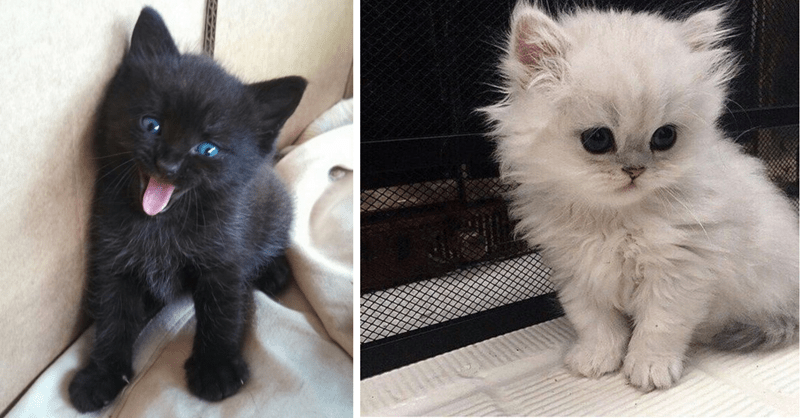 15 photos of super cute kittens