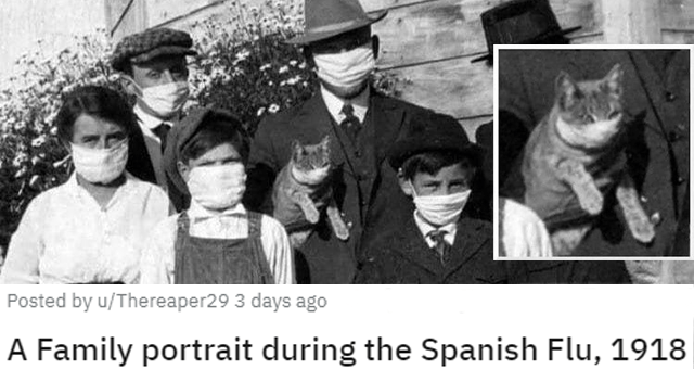 pics and vids of the cutest animals of the week thumbnail includes a picture of a family portrait in which everyone including the cat is wearing a face mask 'A Family portrait during the Spanish Flu, 1918 u/Thereaper29'