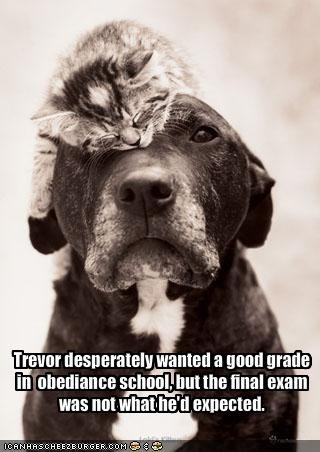 cute dogs exam grade kitten lolcats loldogs lolkittehs obedience training school - 1404765440