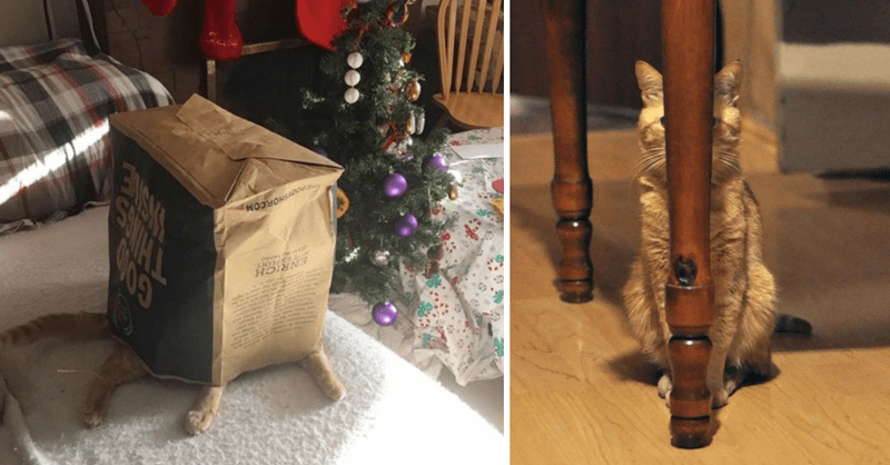cats that aren't good at hiding