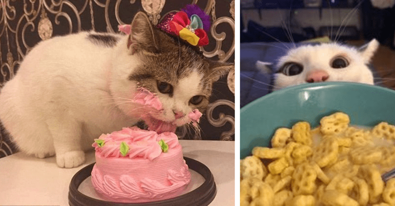 11 pictures of cats loving food