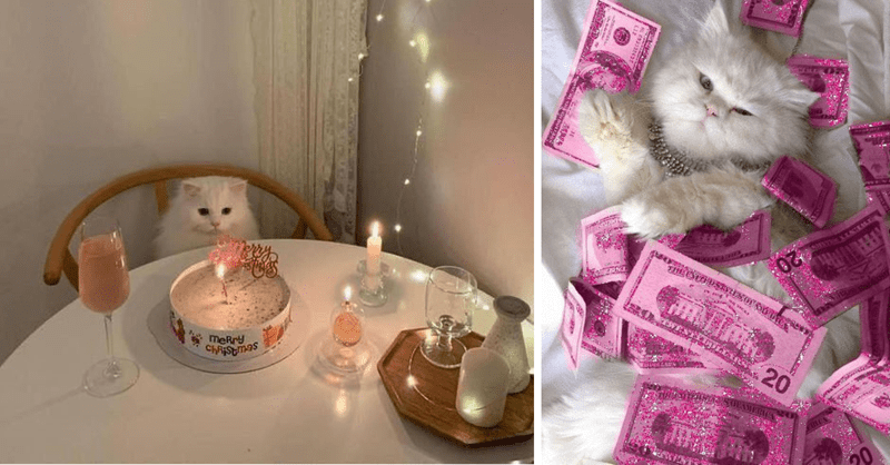 13 photos of cats that are spoiled